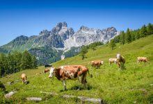 Photo of Pohoří Rax