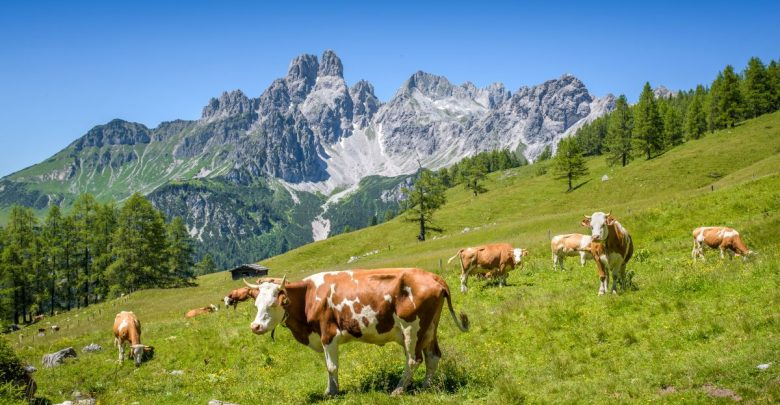 alpy, rax, dovolená v alpách, dovolená rakousko