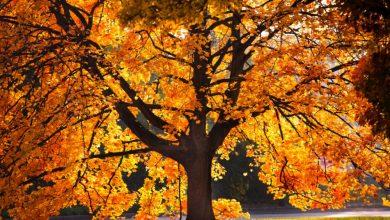 Photo of Harrach Park