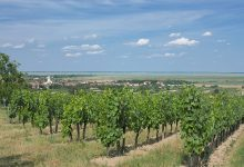 Photo of Burgenlandsko – Oggau