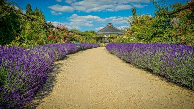 Photo of Kittenberské zahrady – Kremže – Tulln