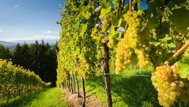Photo of Kam za vínem v Rakousku